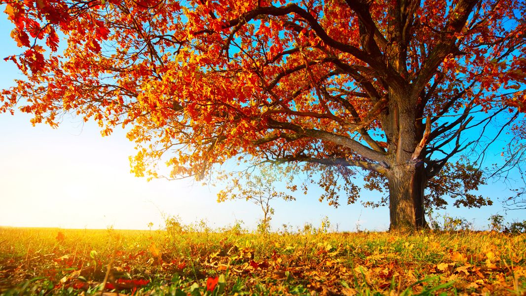 ayurvedic eating in fall