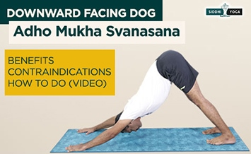 adho mukha svanasana downward facing dog