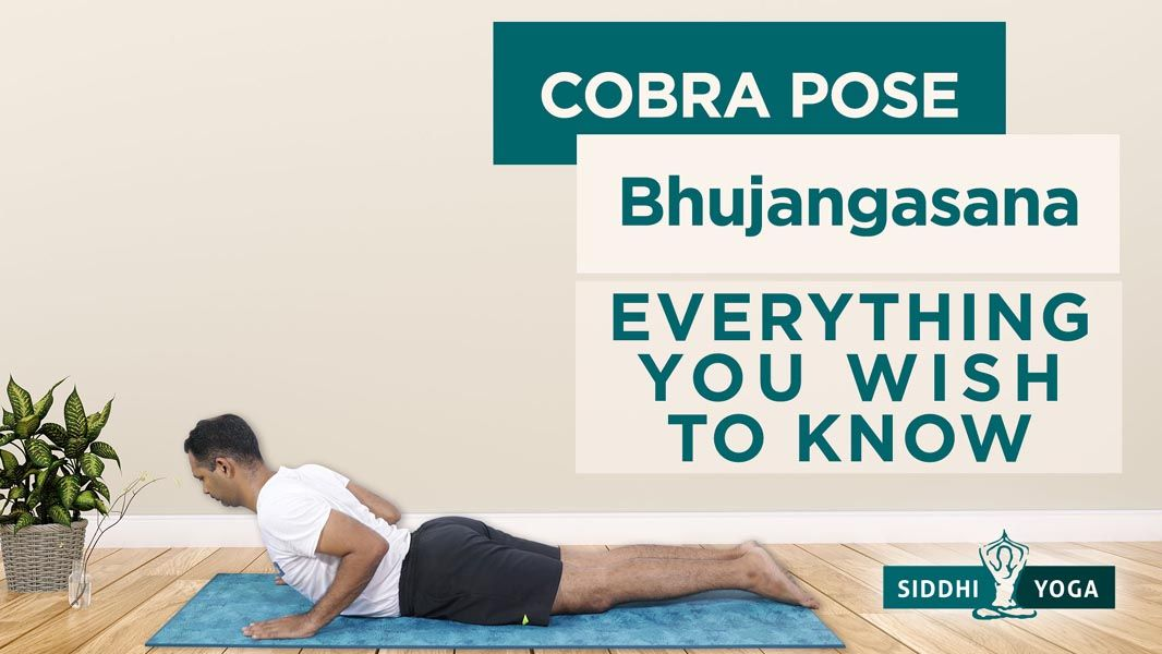 Bhujangasana Cobra Pose Benefits How To Do Contraindications