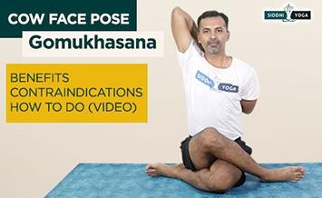gomukhasana cow face pose