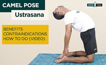 ustrasana camel pose benefits how to do contraindications