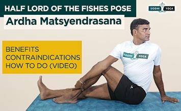 ardha matsyendrasana half lord of the fishes pose