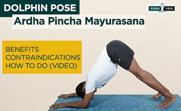 ardha pincha mayurasana dolphin pose benefits