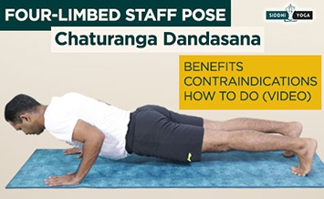 chaturanga dandasana four limbed pose