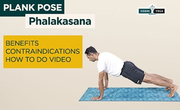 phalakasana plank pose