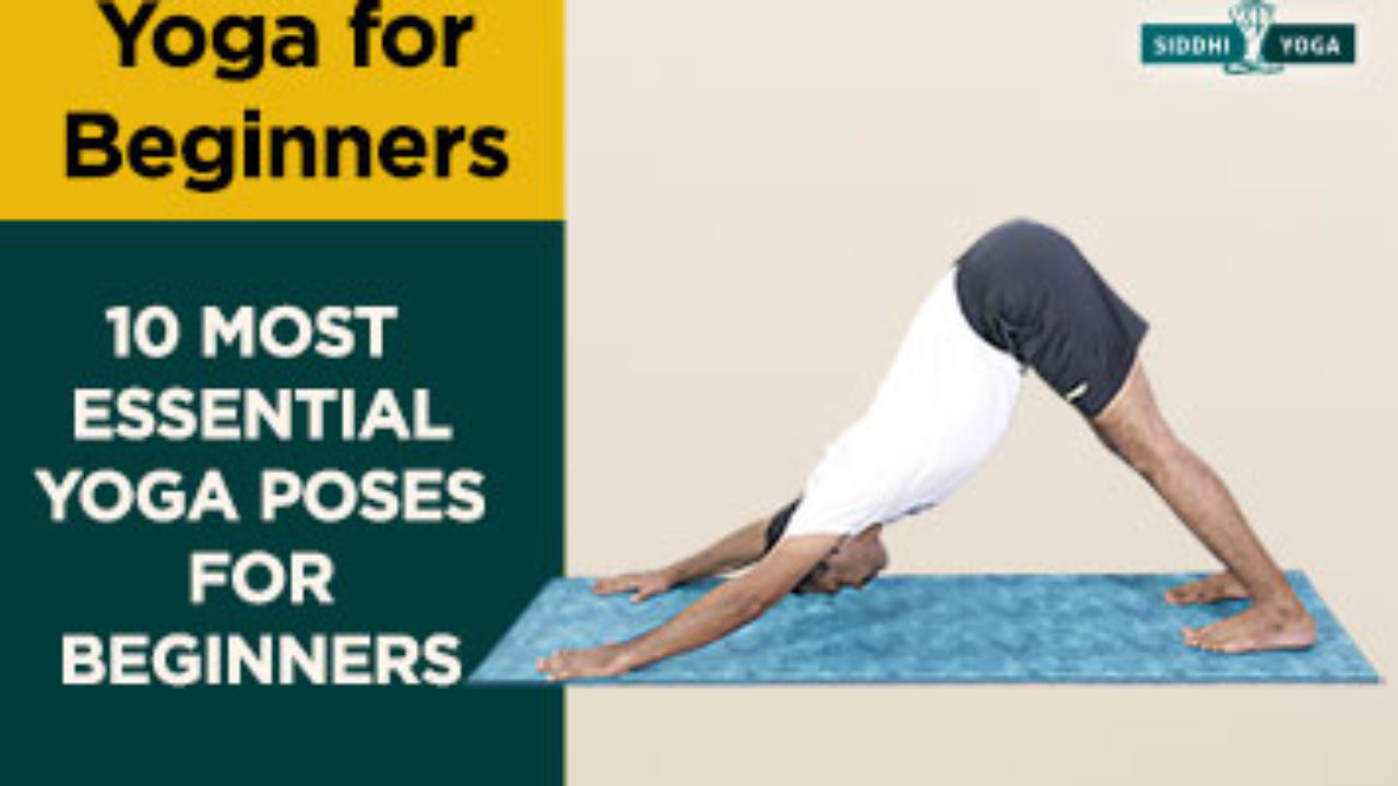 10 Most Essential Yoga Poses For Beginners Siddhi Yoga