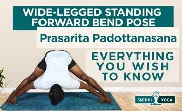 prasarita padottanasana wide legged standing forward bend