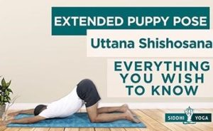 extended puppy pose uttana shishosana