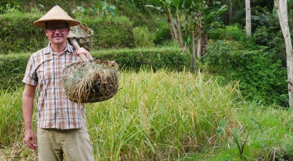 tegallalang rice terraces bali