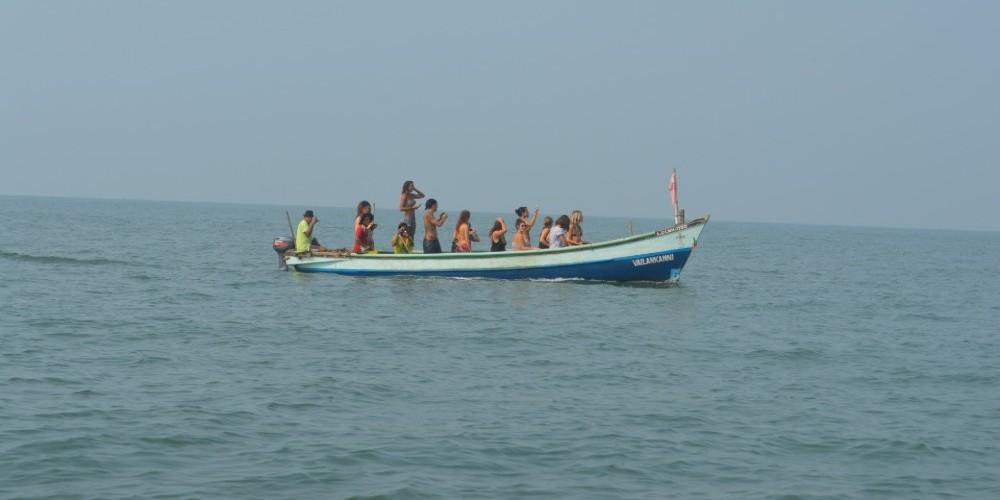 путешествие дельфина