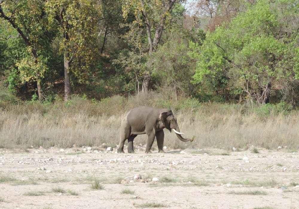 rishikesh temperature wildlife